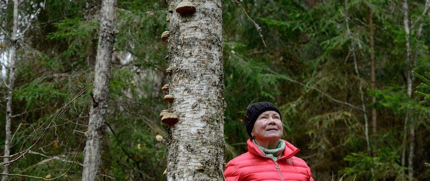 Metsävuoden ympäristöpalkinnot Oiva Luukkoselle sekä Raija ja Ossi Tuuliaisen säätiölle — näyttävät hyvää esimerkkiä muille